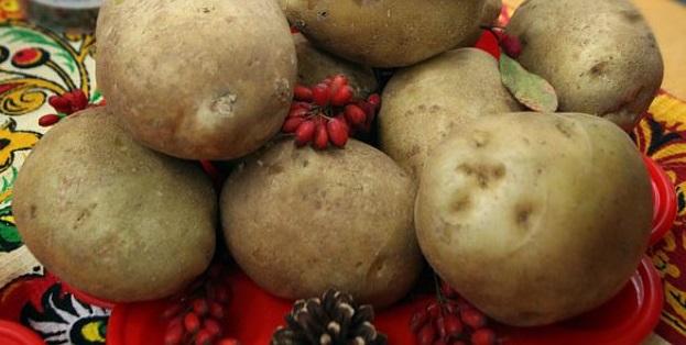 фото сорта картофеля янтарь