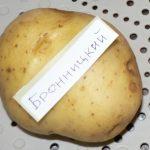 фото бронницкой картошки