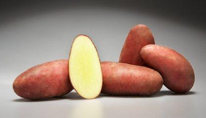 фото картошки мажор