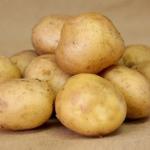 фото картошки Никита