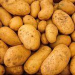 фото картошки Ньютон
