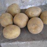 фото картошки вымпел