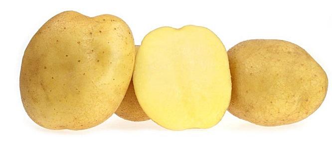 фото сорта картофеля Гермес