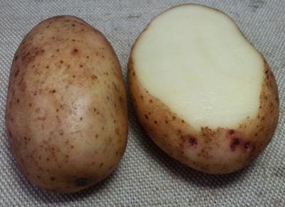 сорт картофеля серпанок фото