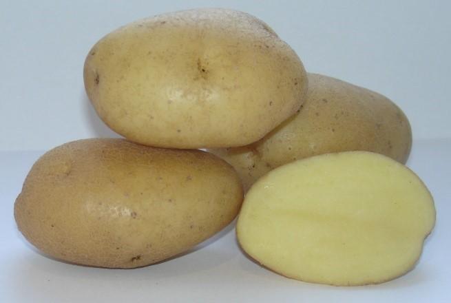 сорт картофеля выпмел фото