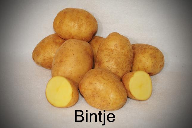 фото сорта картофеля Бентье (Bintje)