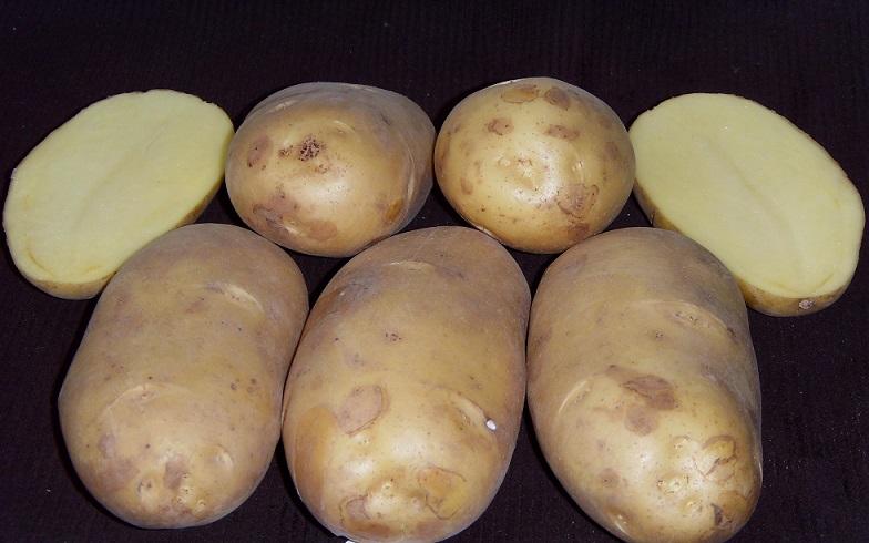 фото сорта картофеля чароит