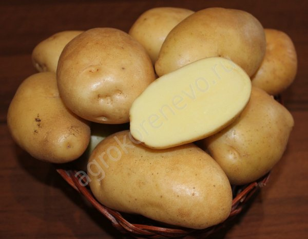 фото сорта картофеля Жигулевский