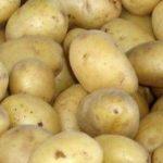фото картошки победа
