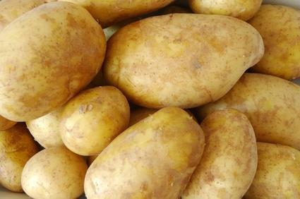 фото картошки щедрык
