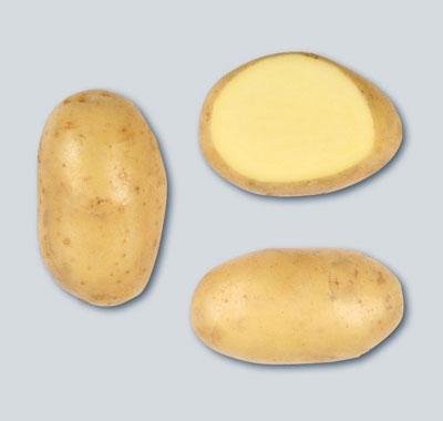 сорт картофеля Челленджер фото