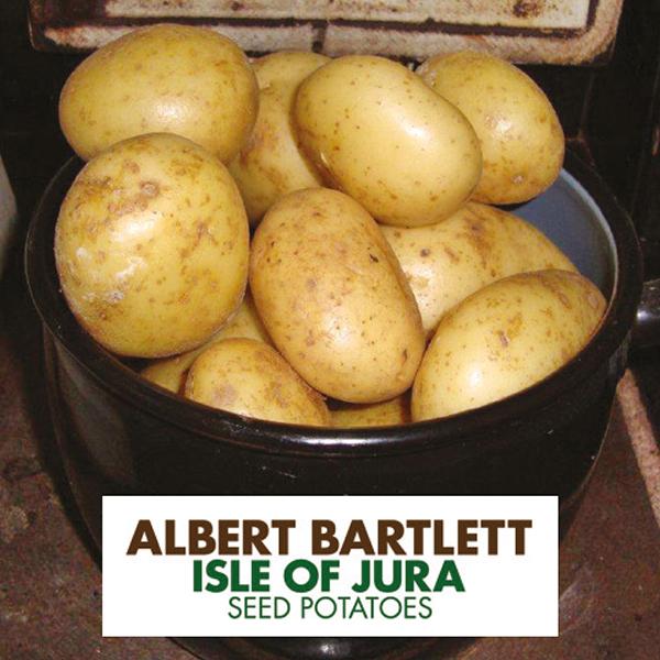 фото сорта картофеля джура