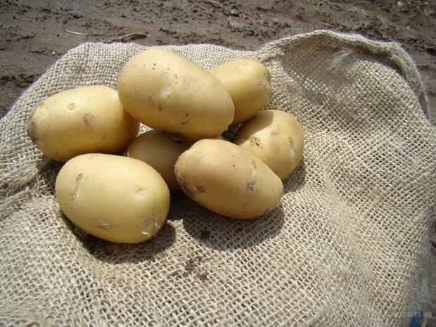 сорт картофеля победа фото