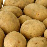 сорт картофеля щедрык фото