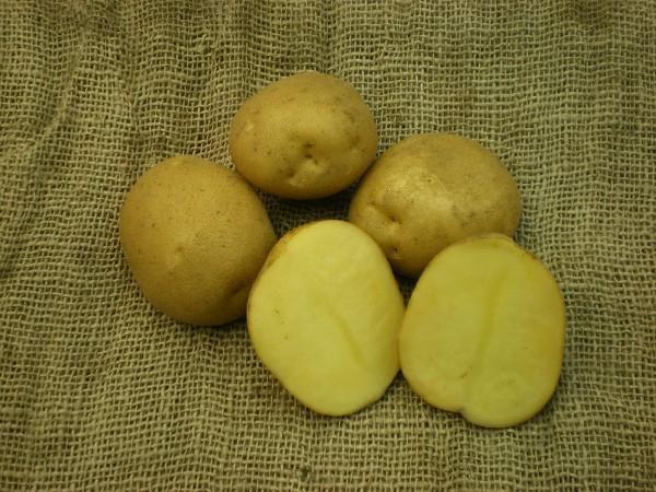 фото сорта картофеля танай