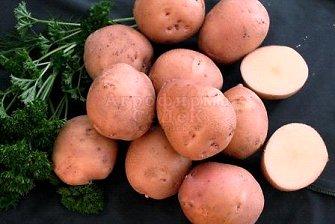 фото сорта картофеля взрыв