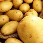 фото белорусской картошки росинка