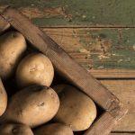 что можно сеть после картофеля в следующем году