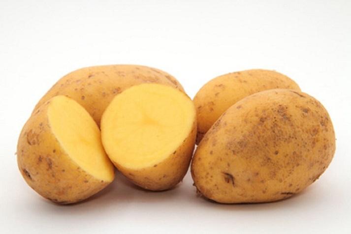 фото сорта картофеля Беллаприма