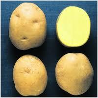 фото сорта картофеля росинка