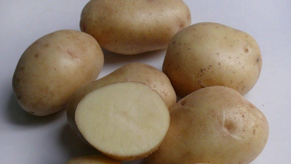 фото сорта картофеля вармас