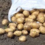 фото картошки старт