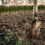 обработка почвы после фитофтороза картофеля