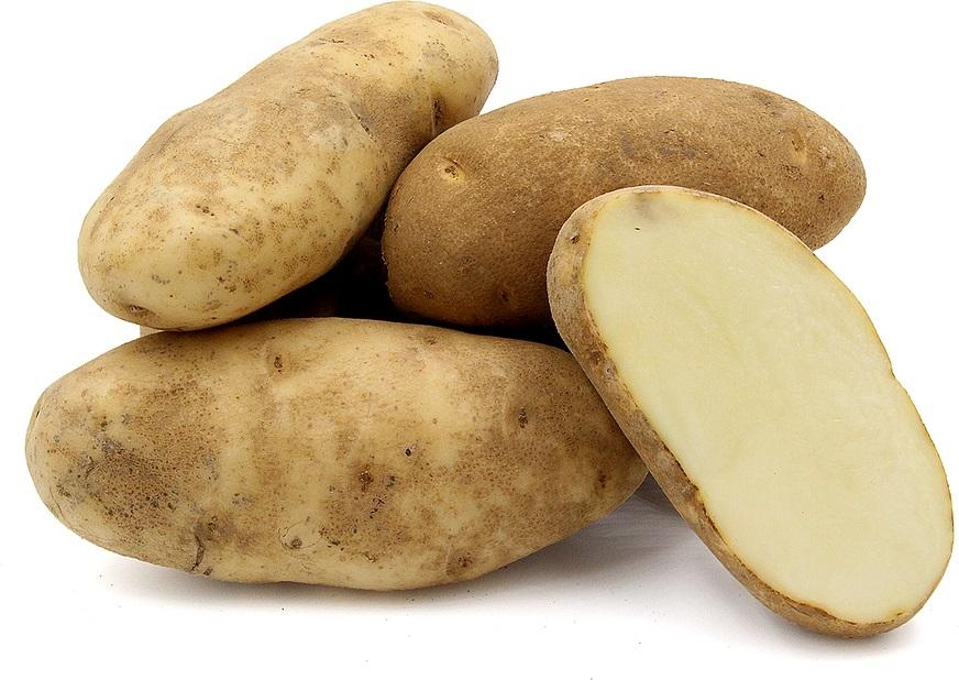 фото сорта картофеля айвори рассет