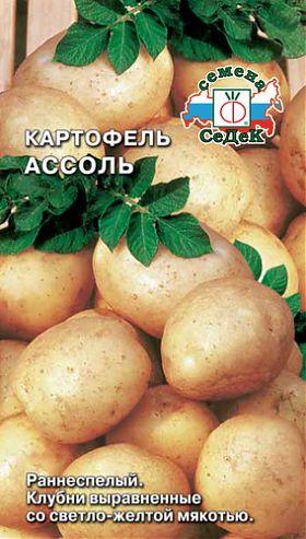 фото сорта картофеля ассоль