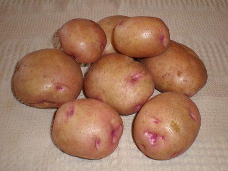 фото сорта картофеля бородянский