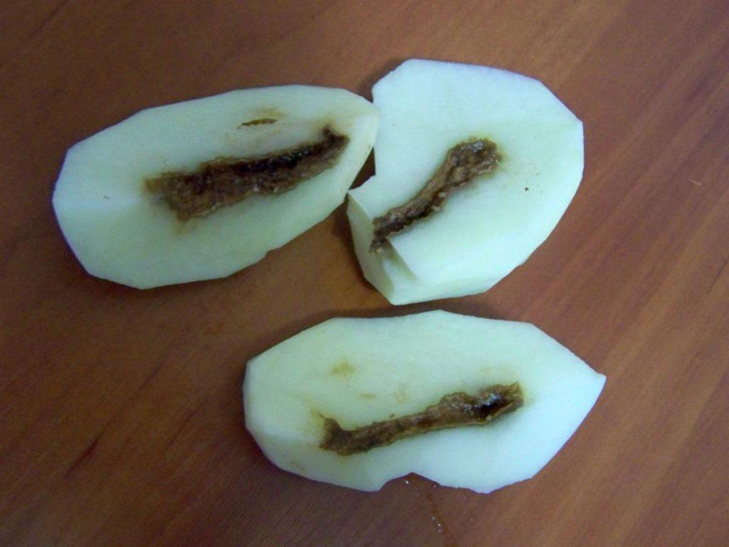 фото полого внутри картофеля