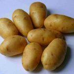 фото картошки Алиса