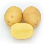 картошка аргос фото