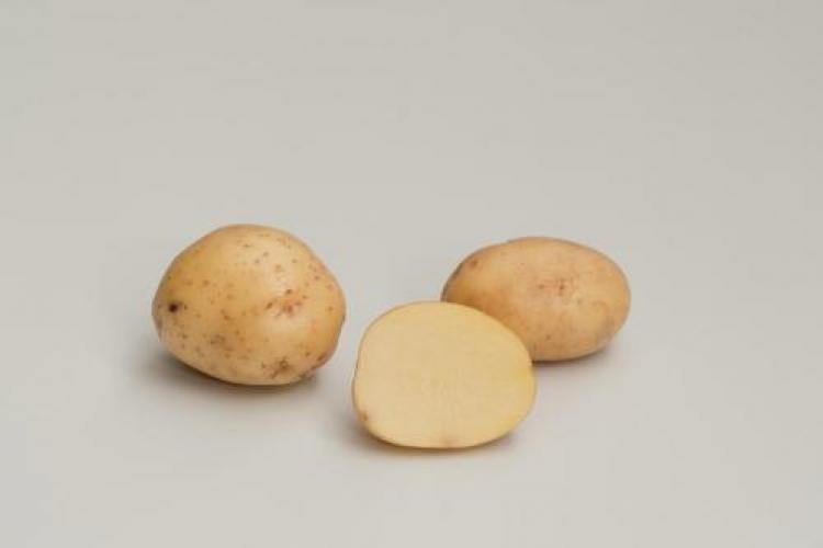 фото сорта картофеля альбатрос