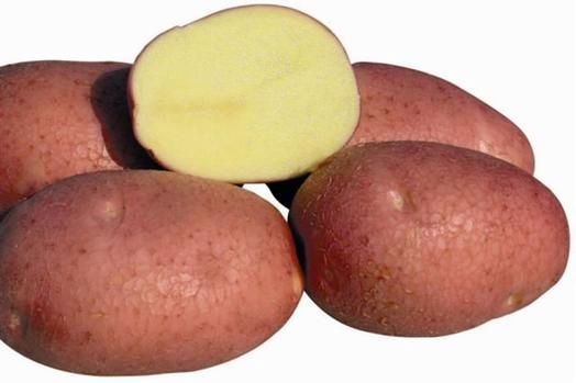 фото сорта картофеля амур