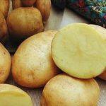 фото Белоусовской картошки