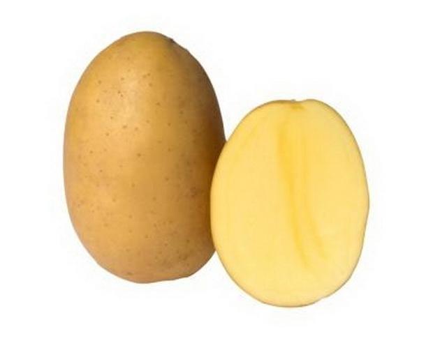 фото сорта картофеля Белоусовский
