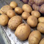 фото картошки аспия
