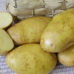 фото картошки юбилей Жукова