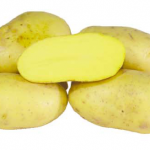 фото картошки бернина