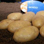 фото картошки биоголд