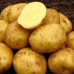 фото картошки блакит