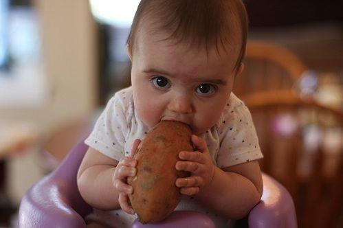 когда ребенку можно начинать есть картошку