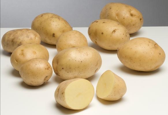 фото сорта картофеля биоголд