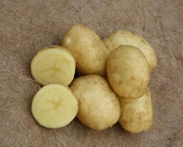 фото сорта картофеля блакит