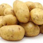 фото картошки Болвинская