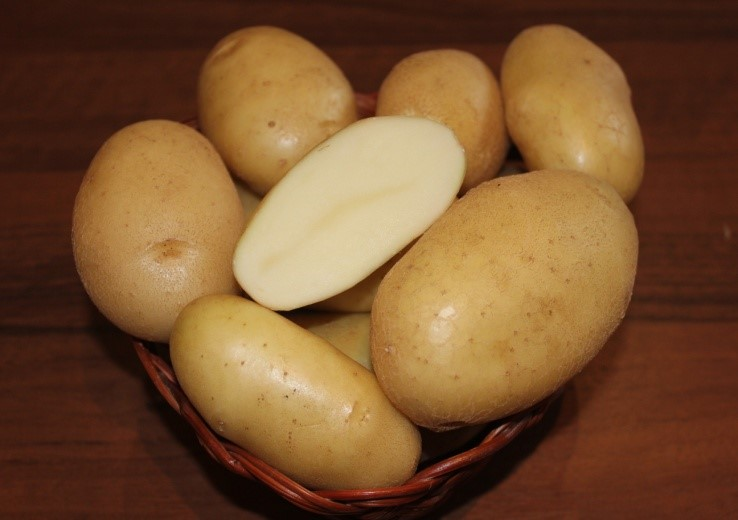 фото сорта картофеля Болвинский