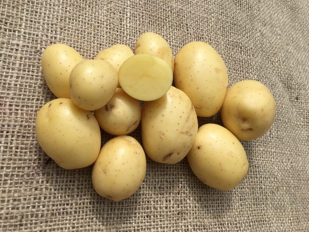 фото сорта картофеля верди