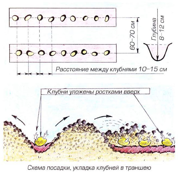 схема посадки картошки в траншею