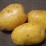 фото брянской юбилейной картошки